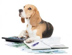 Pet insurance can be a big help for dog owners and their budgets. Learn how pet insurance works and find the right plan for your dog. Cat Insurance, Pet Health Insurance, Dog Food Comparison, Dog Boarding Near Me, Cheap Pets, What Dogs, Can Dogs Eat, Veterinary Care, Pet Life