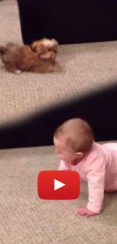 Une conversation intense entre bébé et chiot.  http://rienquedugratuit.ca/videos/une-conversation-intense-entre-bebe-et-chiot/
