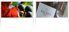 Award Winning English Wine and Entertaining Vineyard Tour and Tasting Gift Experiences, West Sussex, England.