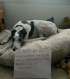 """Welcome to Greyhound Adoption - """"my foster left me alone for 2 hours (uncrated) and I did nothing wrong"""