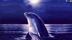 Дельфины, луна, две машины, вода