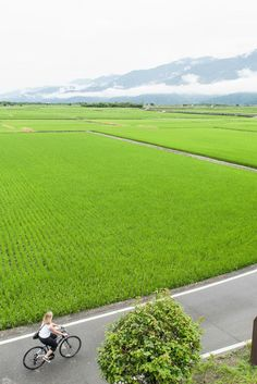 The best places for cycling in Taiwan | Local bicyclists share their top cycling routes and rides where you can see the most beautiful Taiwan landscapes | A cyclist passing rice fields in Taiwan.