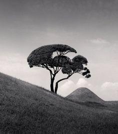 Tree and Mountain (Kumamoto, Kyushu, Japan, © Michael Kenna