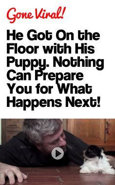 THIS IS THE CUTEST THING EVER!!! http://theilovedogssite.com/he-got-down-on-the-floor-with-his-puppy-nothing-can-prepare-you-for-what-happens-next/ Chihuahuas, Cuddles, Animal Pics, Make You Smile, Kisses, Shit Happens, Blowing Kisses, Pet Pictures, Chihuahua
