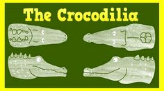 The differences between crocodiles and alligators ★ Witty Smithey