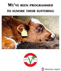 change the program please don't finance animal suffering #vegan #crueltyfree