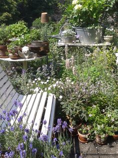 A Garden seat surrounded by plants...my holiday begins at Home.