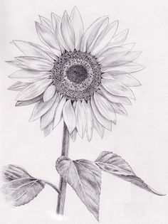 http://www.tattoobite.com/wp-content/uploads/2014/09/sunflower-tattoo-drawing.jpg