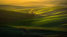 Spring - Palouse hills from Steptoe Butte State Park, Washington.