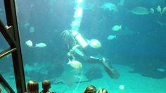 "Maui Ocean Center Aquarium ""shark and fish feeding"" presentation part 2 ..."