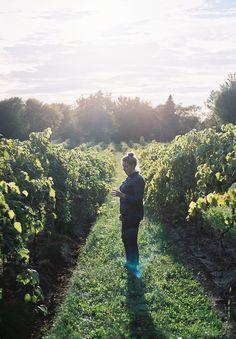 Missouri wineries .