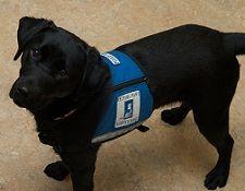 Autism Service Dogs in schools