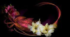 Mija's Bloemen by * Carol *