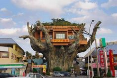 So it's not a house, but it is a treehouse restaurant. What a beautiful tree, hope they preserve it well! Hmmm I wonder what's the story behind this restaurant. Naha Harbor Diner aka The Treehouse Restaurant, Okinawa, Japan. Naha, Okinawa Japan, Okinawa Food, Tokyo Japan, World Trade Center, The Places Youll Go, Places To See, Tree Restaurant, Diner Restaurant