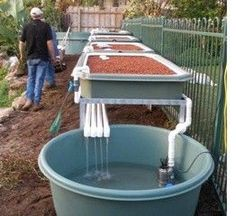 Aquaponics backyard design Check out: bestaquaponicssystem.com