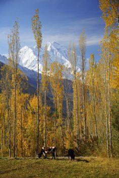 Rakaposhi Peak Pakistan