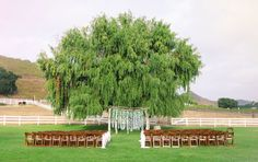 large tree and branch and lily wedding ceremony backdrop | photo: www.priscilavalentina.net