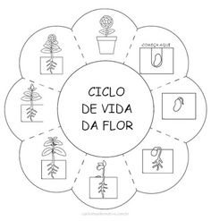 Atividade do Ciclo de Vida da Flor Para Imprimir - Blog Cantinho Alternativo                                                                                                                                                                                 Mais