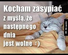 Good Night, Good Morning, Weekend Humor, Christmas Tale, Cute Cats And Dogs, Quotes For Students, Man Humor, Motto, Funny Dogs