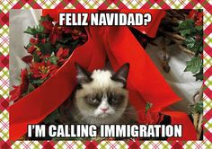 Grumpy cat frowns on your shenanigans. Grumpy cat is not impressed. I wonder if grumpy cat is an engineer. I did find some Grumpy Cat gifs: Grumpy Cat say \ Grumpy Cat Christmas, Christmas Humor, Merry Christmas, Christmas Stuff, Christmas Animals, Christmas Quotes, Christmas Vacation, Christmas Shopping Meme, Christmas Holidays