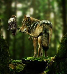 How cool is this! Reminds me of the 2 characters, the Hawk & the Wolf, in the 1985 movie Lady Hawk