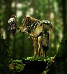 lupo -animali del bosco