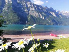 Welches ist der schönste Schweizer See? Ich verrate dir meine persönlichen Favoriten und gebe dir Tipps für Anreise, Unterkunft und Restaurants. Wähle aus und besuche den schönsten See in der Schweiz. Kanton, St Gallen, Golf Courses, Mountains, Nature, Travel, Europe, Small Restaurants, One Day Trip