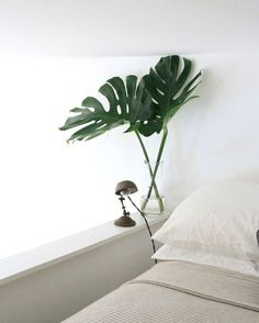 There's no space for a large Monstera deliciosa in a tiny apartment. But a leaf or two of a Monstera plant? That's all you need to bring the tropics home. Bathroom Interior Design, Home Interior, Interior And Exterior, Apartment Interior, Bathroom Designs, Apartment Living, Monstera Deliciosa, Monstera Leaves, Philodendron Monstera