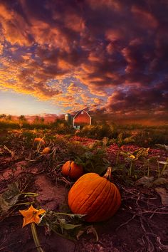 ~~Echoes You Can See | pumpkin farm, Paris, Wisconsin | by Phil Koch~~
