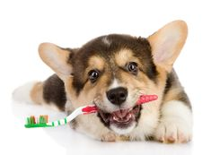 6 Easy Fresh Breath Tips & How to Brush Doggy Teeth (Without Getting Bit!)