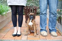 Family Portrait--Boxer Puppy, Poppy--12 weeks old