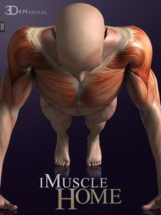 Health And Fitness Apps, You Fitness, Sports Training, Physical Education, At Home Workouts, Anatomy, Android, Muscle, Medical
