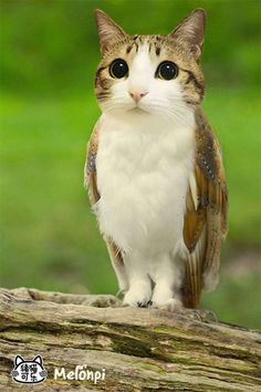 "In Chinese, owls are called ""猫头鹰"" (mao tou ying), which would mean ""cat-headed eagle"" Bizarre Animals, Animals And Pets, Funny Animals, Cute Animals, Fantasy Creatures, Mythical Creatures, Photoshopped Animals, Animal Mashups, Owl Cat"