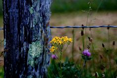 Cades Cove Wildflowers