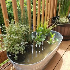The Ultimate Guide To DIY Outdoor/Indoor Mini Fish Ponds   STEP-BY-STE – AQUAPROS Outdoor Fish Ponds, Fish Ponds Backyard, Indoor Pond, Patio Pond, Indoor Water Garden, Garden Bathtub, Ponds For Small Gardens, Fish Pond Gardens, Water Gardens