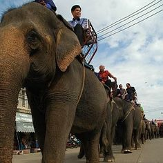 An abusive elephant festival, which has been going on for the past 40 years, involves the kidnapping and torture of these intelligent creatures. Elephants are forced to perform unnatural tricks and subjected to years of mistreatment. Sign this petition and demand this cruel spectacle be put to an end.
