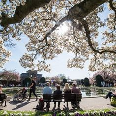Visitors sit under a blooming magnolia in the zoo in Stuttgart, Germany
