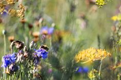 View top-quality stock photos of Meadow Flowers. Find premium, high-resolution stock photography at Getty Images. My Photos, Stock Photos, Meadow Flowers, Image Collection, Royalty Free Images, Close Up, Autumn, Plants, Photography