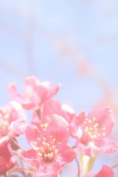 #flowers #pink #photography #spring #blossoms