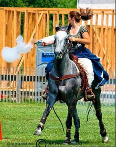 An off-the-track Thoroughbred as a mounted shooting horse? Why not! #OTTB