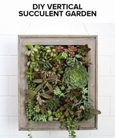 Plant your favorite succulents in this vertical garden!
