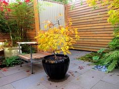 Small trees can still grace a patio with their beauty when contained by large, deep pots.