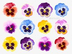 Buy Set Of Pansy Flowers by Greylilac on GraphicRiver. Vector set of vibrant detailed pansy flowers Protea Flower, Flora Flowers, Flowers Nature, Dried Flowers, Watercolor Flowers Tutorial, Flower Tutorial, Vector Flowers, Flower Clipart, Dragon Fruit Vector