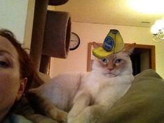 this is my cat Rashi...in a banana trucker hat