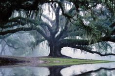 Là où va la pensee, l'énergie va*** Prends bien soin de tes pensées, dirige-les vers des fréquences positive de lumière d'amour pour ton corps, ton âme, ta tête et ton coeur** Envoie des ondes fortes et fluides, le monde en a tellement besoin! Soyons aussi ancrés que cet arbre majestueux, les branches s'étandant vers la Vie, donnant notre plus haut potentiel... Saluons la Nature et voyons en Elle un Maitre de Vie*** Elaya Gaia