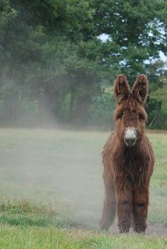Donkey.. OOOOooooo ....I kinda Want one.... ok moment gone, but this ones SooOOOo cUtE!!!!!