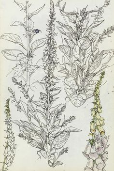 Charles Mahoney, Foxgloves, circa 1935, as Liss Fine Art's Special Selection