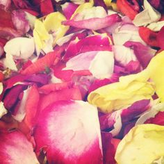 Rose petals from garden - to be dried for confetti
