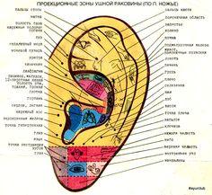AyurClub - Аюрведа клуб. Профилактика и лечение.: Массаж ушей - душа и тело в гармонии и здравии.