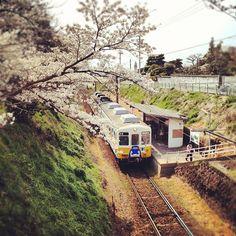 桜の丘をおもちゃの電車がことこと走る